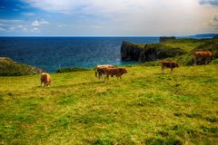Wiejski krajobraz z krowy stadem Zdjęcia Royalty Free