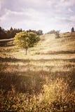 Wiejski krajobraz z pojedynczym drzewem Zdjęcia Royalty Free