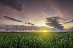 Wiejski krajobraz z pszenicznym polem na zmierzchu Zdjęcie Stock