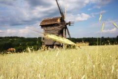 Wiejski krajobraz z pszenicznym zarazkiem i wiatraczkiem Fotografia Royalty Free
