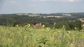 Wiejski krajobrazowy góra krajobraz Żółci pszeniczni pola zbiory wideo