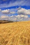 WIEJSKI KRAJOBRAZOWY lato Górkowaty krajobraz z polami uprawnymi Włochy Zdjęcia Stock
