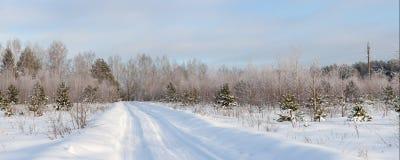 Wiejski lasu krajobraz Zdjęcie Royalty Free