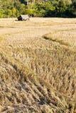 Wiejski pole po ryżowego żniwa Obrazy Stock