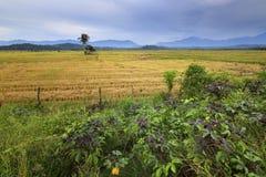 Wiejski sceny głęboko inside Borneo Zdjęcie Stock