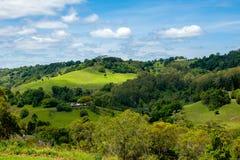 Wiejski widok Australia uprawiać ziemię na wzgórzu i bydło obrazy stock