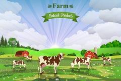 Wiejski wschodu słońca krajobraz z krowami i gospodarstwem rolnym ilustracji