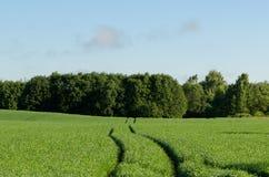 Wiejskiego krajobrazowego żyta drogowy prowadzić w kierunku horyzontu Obraz Stock