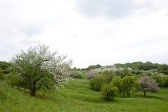wiejskiego zakwitnąć scenerii spring drzewa Zdjęcia Stock