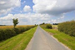 Wiejskiej drogi i głogu hedgerow Zdjęcia Stock