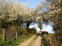 wiejskiej drogi wiosna Fotografia Royalty Free