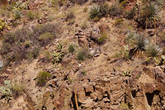 Wiek roślina (agawa americana) Obrazy Stock