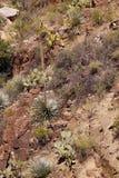Wiek roślina (agawa americana) Obrazy Royalty Free