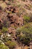Wiek roślina (agawa americana) Zdjęcia Royalty Free
