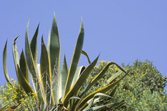 wiek roślinnych Zdjęcia Stock