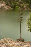 Wiek rośliny kwitnienie Zdjęcia Stock