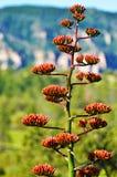 Wieka kaktus Obrazy Royalty Free