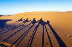 Wielbłądów cienie nad ergiem Chebbi przy Maroko Fotografia Royalty Free