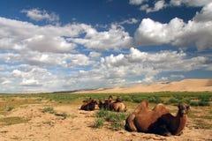 wielbłądów diun przodu piasek Obrazy Royalty Free