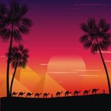 wielbłądów karawany pustynia Fotografia Royalty Free