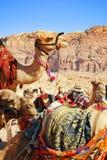 wielbłądów pustyni transport Zdjęcia Stock
