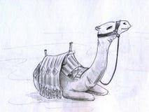 wielbłąd ilustracji