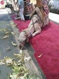 Wielbłąd Zdjęcie Royalty Free
