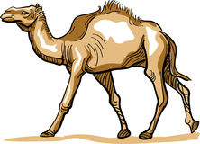 Wielbłąd royalty ilustracja