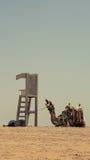 Wielbłąd jest na odpoczynku Fotografia Royalty Free