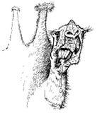Wielbłąd. Karykatura Obrazy Royalty Free