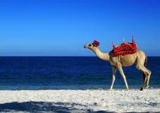 wielbłąd na plaży royalty ilustracja