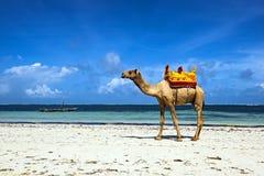 Wielbłąd na plaży Zdjęcia Royalty Free