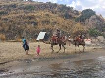 Wielbłąd plaża fotografia stock