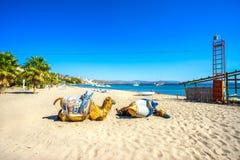 Wielbłąd plaża, Bodrum, Turcja fotografia stock