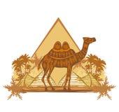 Wielbłąd w Egypt pustyni - sztandar Zdjęcie Royalty Free