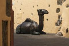 Wielbłąd w miasteczku Zdjęcia Royalty Free
