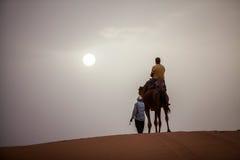 Wielbłąd w pustyni Obrazy Stock