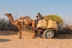 Wielbłąd z dwa indyjskimi mężczyzna i torbami na przyczepie Zdjęcie Stock