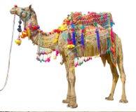 Wielbłąd z tradycyjną dekoracją obraz royalty free