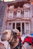 wielbłąda petra zdjęcia stock