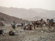 Wielbłąda rynek w regionie w północnym Etiopia Daleko Zdjęcie Royalty Free