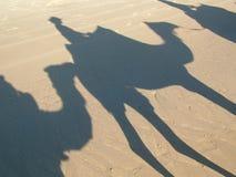 wielbłądy Zdjęcie Stock