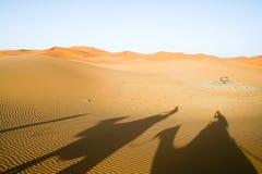 wielbłądy dezerterują Sahara cienie Fotografia Stock
