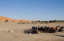 Wielbłądy Przy Sahara Zdjęcie Royalty Free