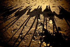 Wielbłądzi cienie Zdjęcia Stock