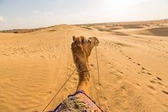Wielbłądzi jeźdza widok w Thar pustyni, obrazy royalty free