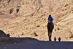 wielbłądzi jeździec Obrazy Royalty Free