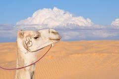 Wielbłądzi kaganiec przeciw tłu pustynny i chmurny niebo Fotografia Stock