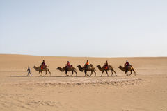 Wielbłądzi karawanowy iść przez piasek diun w Gobi pustyni, C Zdjęcie Royalty Free