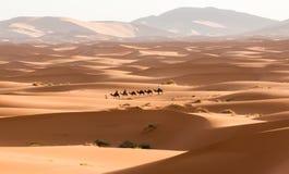 Wielbłądzi karawanowy iść przez piasek diun w saharze Maroko Afryka Piękne piasek diuny w Sahara Zdjęcie Stock